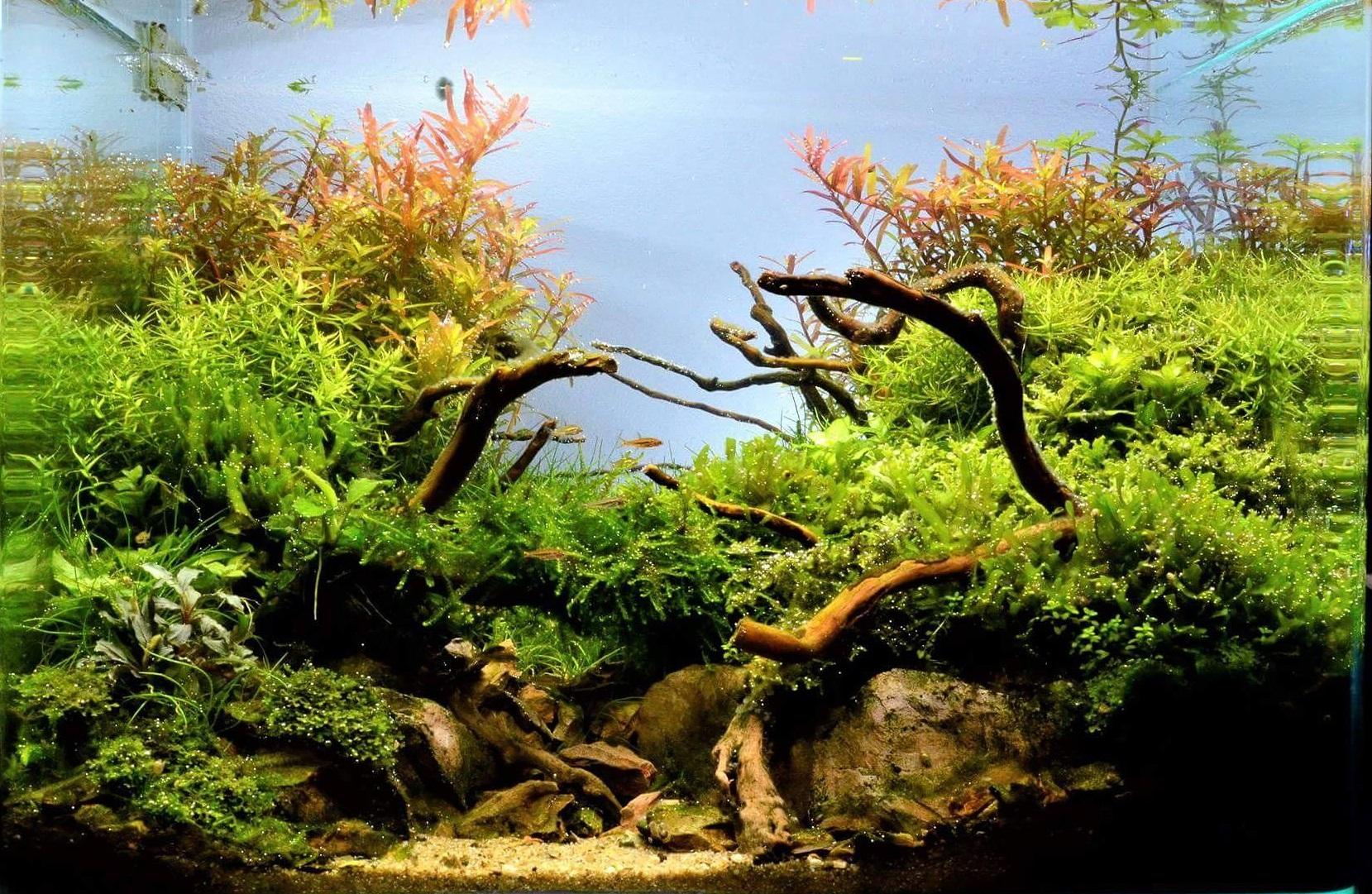 Missie Indoor Nature Design