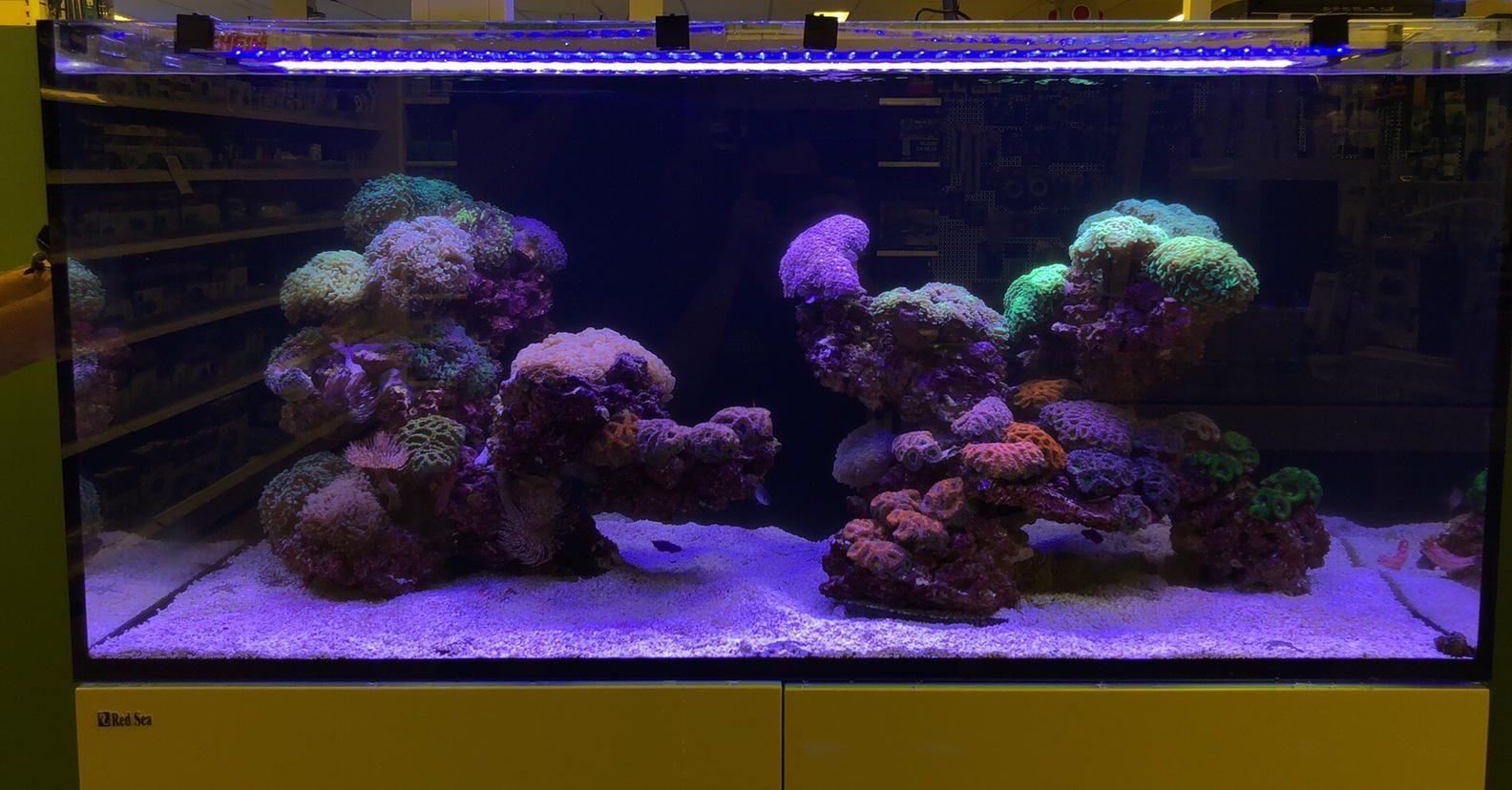 Design reef tank