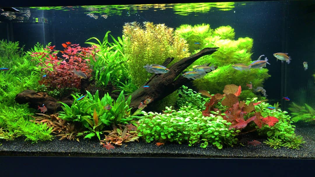 Nature aquarium Hollandse stijl. Een maatwerk aquarium