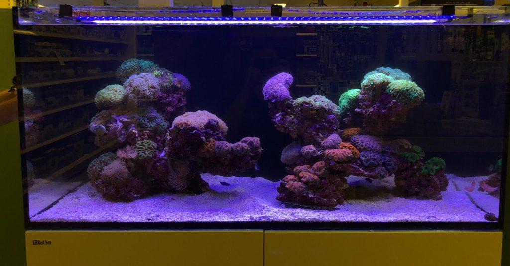 Design reef tank met vooral euphyllia ancora en acanthastrea soorten
